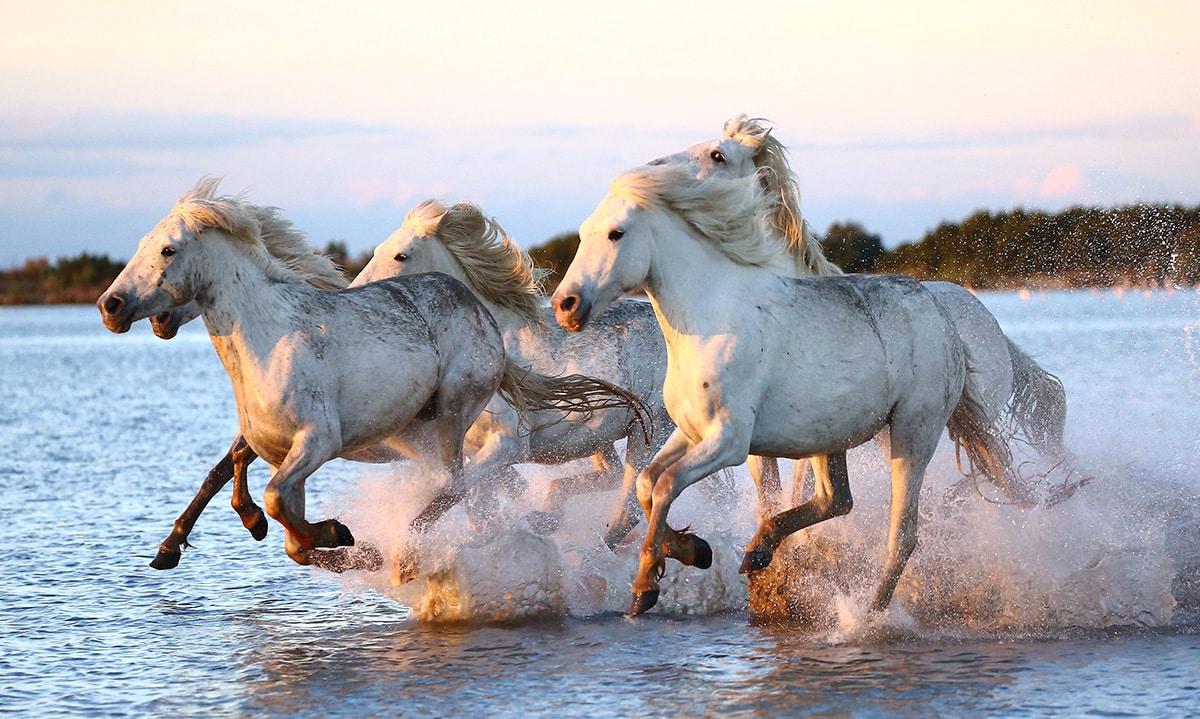 Soñar con caballos corriendo